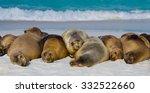 Sea Lions On The Beach. Sittin...