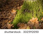 The Lower Part Of The Trunk Of...