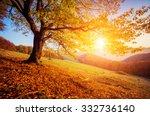 majestic alone birch tree on a... | Shutterstock . vector #332736140