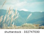 feather grass with retro sky... | Shutterstock . vector #332747030