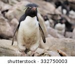 rockhopper penguin on rock on... | Shutterstock . vector #332750003