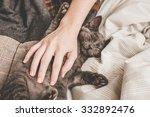 Stock photo kitten in bed 332892476