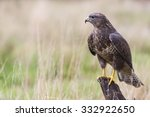 A Wild Buzzard Sitting On An...
