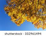 Autumn Maple Leaves Against Th...