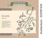 rosa canina aka dog rose sketch.... | Shutterstock .eps vector #332987534