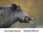 Wild Boar Head Shot  Autumn...