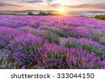 field of delicate lavender... | Shutterstock . vector #333044150