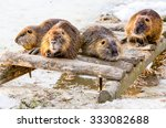 four members of a beaver family ... | Shutterstock . vector #333082688