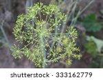 fennel | Shutterstock . vector #333162779