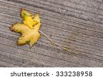 Two Yellow Autumn Maple Leaves...