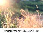wild field of grass on sunset ... | Shutterstock . vector #333320240