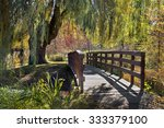 Wooden Bridge Under Weeping...