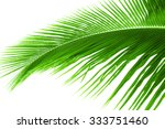 palm tree leave isolated on... | Shutterstock . vector #333751460