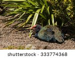 Small photo of closeup of resting takahe bird