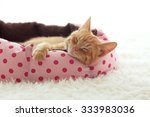 Stock photo a ginger kitten sleeps in his soft cozy bed on a white carpet soft focus 333983036