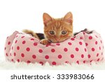 Stock photo a ginger kitten lying in his soft cozy bed on a white carpet soft focus isolated photo 333983066