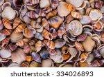 Sea Shells Seashells    Variet...