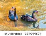 Black Swans. Black Swans. Wild...