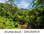 Lush Green Jungle Surrounding...