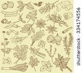 hand drawn collection of spices ... | Shutterstock .eps vector #334174556