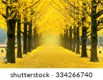 row of yellow ginkgo tree in... | Shutterstock . vector #334266740