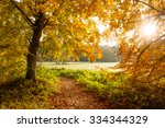 sunlight through the trees in a ... | Shutterstock . vector #334344329