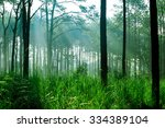 pine forest at thung salaeng... | Shutterstock . vector #334389104
