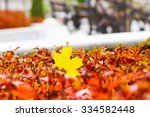 autumn  yellow leaf on the...   Shutterstock . vector #334582448