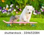 Stock photo white swiss shepherd s puppy and tabby kitten on skateboard 334652084