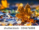 Autumn Colors. Autumn Leaves I...