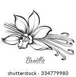 vanilla pods and flower. hand... | Shutterstock .eps vector #334779980