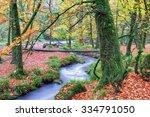 A Woodland Stream At Golitha...