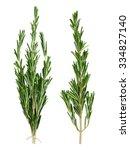 set of fresh green rosemary...   Shutterstock . vector #334827140
