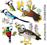 vector funny south american... | Shutterstock .eps vector #334884506