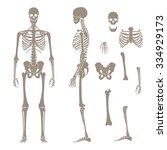 human skeleton silhouette | Shutterstock .eps vector #334929173