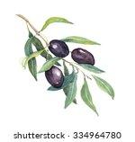 Olive Branch With Black Olives...