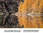 beautiful orange tree...   Shutterstock . vector #335004560