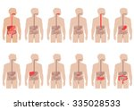 human anatomy digestive system  ... | Shutterstock .eps vector #335028533