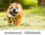 Bulldog English Run Pet Funny...
