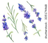 watercolor lavender flowers.... | Shutterstock . vector #335174468