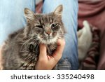 woman takes in hands beautiful... | Shutterstock . vector #335240498