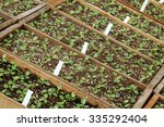 plants ready for planting... | Shutterstock . vector #335292404