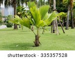 Small Palm Trees Also Need Wel...