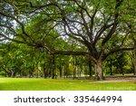 big tree in park   Shutterstock . vector #335464994