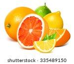 fresh citrus fruits. vector... | Shutterstock .eps vector #335489150