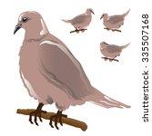 dove isolated on white... | Shutterstock .eps vector #335507168