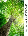 big tree with green leaves  sun ... | Shutterstock . vector #335686640