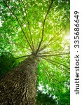 big tree with green leaves  sun ... | Shutterstock . vector #335686649
