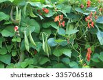 Beans Plants And Flowers As...