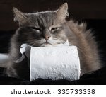 Cat And Toilet Paper On A Blac...